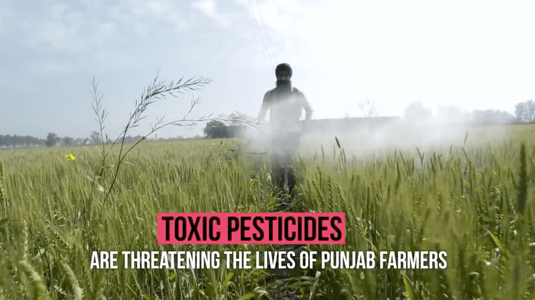 Toxic Pesticides: The Threat to Punjabi Farmers